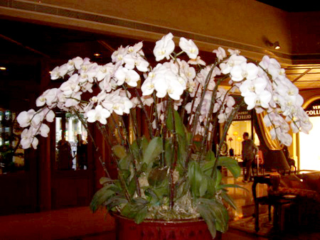 Orchids in the foyer at the Grand Lapa, makes mine at home look pretty sad!